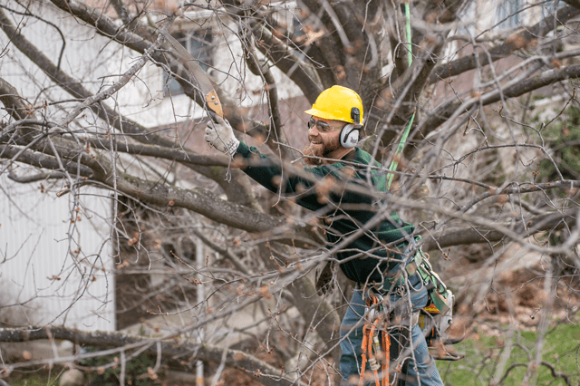 How Severe Weather Like the Recent Winter Storm Can Damages Trees and Plants