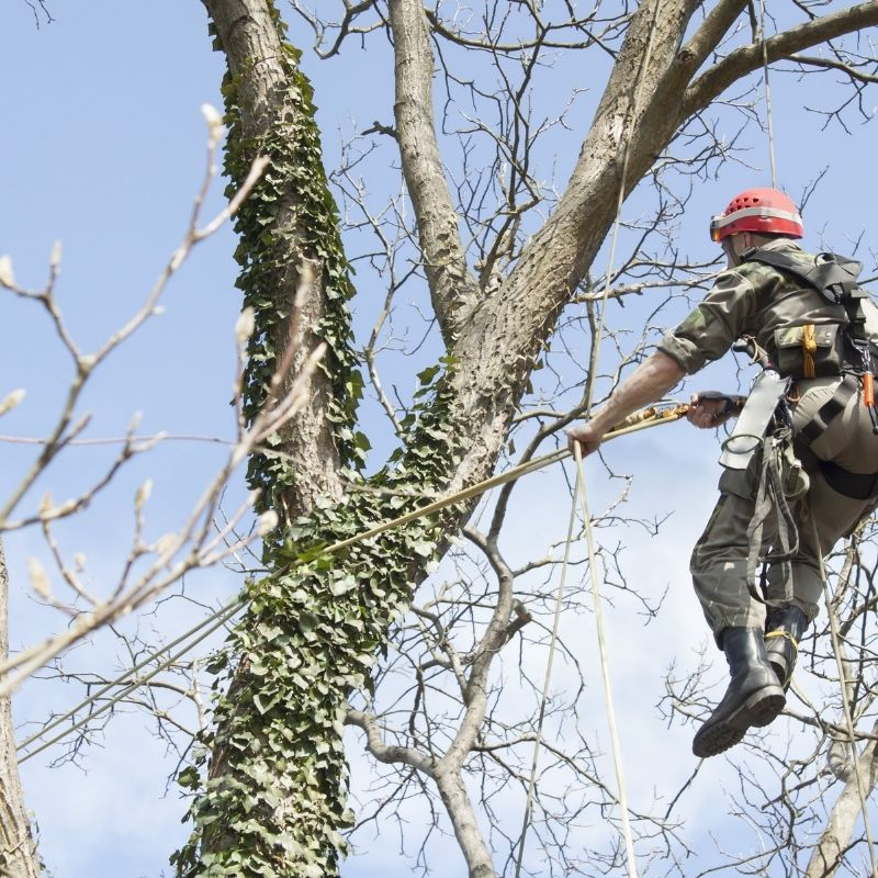 signs of a dead tree dangers and removal
