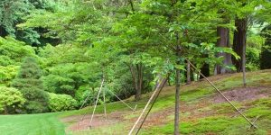 tree cabling and bracing suports