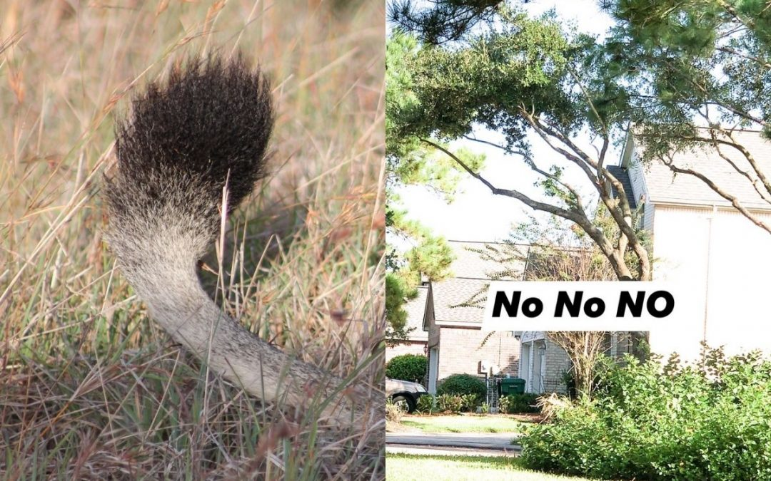 5 Tree Care Mistakes our Arborists can Fix
